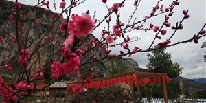 水田菜花节