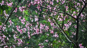 赏春花,净心灵!