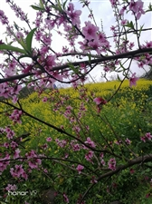 春风巧手织丝绸