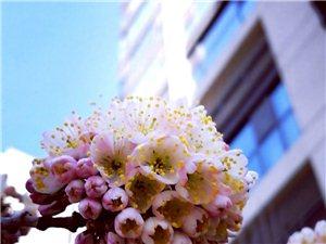 最是一年春好�。。。
