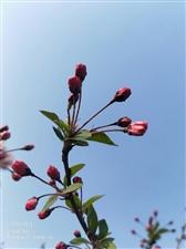 三月桃李芬芳,海棠依旧,春风拂面,莺歌燕舞,暖色撩人,花香沁脾。