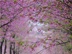 春分时节,花开百卉