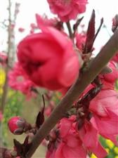 美丽的春天