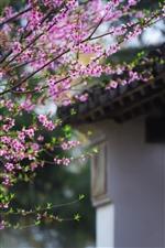 只有桃花盛开时