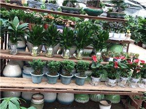 【植物养护】从事植物花卉多年,有相关问题可咨询!