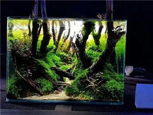 家�b�c健康水景�~缸