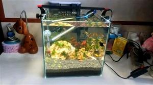 平泉第一家水景缸工作室《无忧草堂》