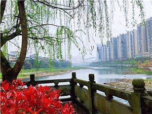 桃红柳绿又一春,酉水岸边色秀人。酉水岸风光秀美!