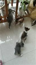喜欢小猫咪的过1个月可以自己来领养。
