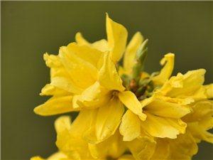 这个春天,明晃晃的黄色