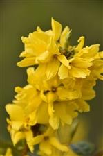 这个春天,明?#20301;?#30340;黄色