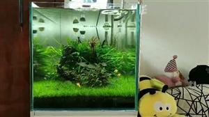 水草景观鱼缸欢迎联系