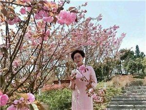 【原创】又是一年樱花季