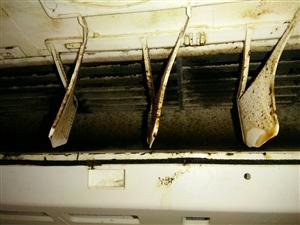 清洗空调中第二次遇到蝙蝠