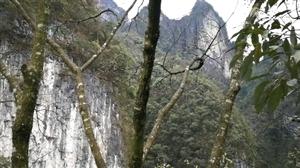 江口黄牯山,美丽风景线
