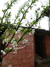写在春天的诗