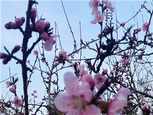 春天里那��百花�_之桃花篇