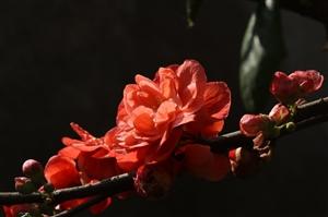 只要心中有花香,平淡的日子都是诗意……