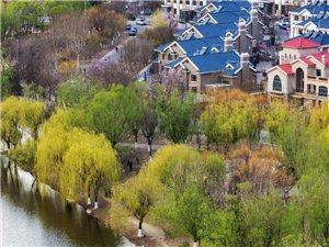 �S心而�z作品:俯瞰��坻明珠-�C�^河