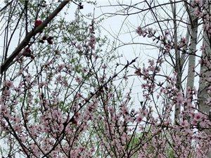 三月三。一江春水暖,一世爱相伴