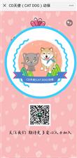 2019年4月6日志愿者提供线索因某处工地有流浪狗我们CD天使(CATDOG)动保志