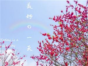 榕江滨河公园樱花??