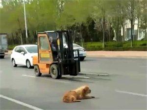 一只可�z的狗狗,在�R路上���牧耍�被�坌娜耸堪l�F,第一�r�g�罅司�,有�坌墓�安局工作人�T�Щ亓斯�安局,并