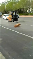 一只可怜的狗狗,在马路上吓坏了,被爱心人士发现,第一时间报了警,有爱心公安局工作人员带回了公安局,并