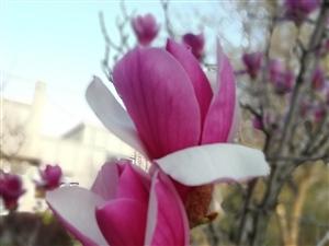 春暖花�_~~美美姜山