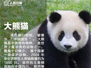 """【让人类不孤单,""""国宝级""""珍稀动物,请留住它们】"""