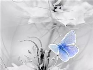 小猫咪与漂亮的蝴蝶