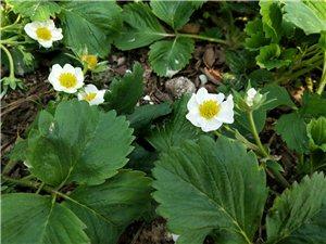 我家门前的春暖花开,为勤劳的老爸点赞!