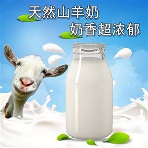 现挤现卖的鲜羊奶,对老人对小孩对年轻人各种补噢……