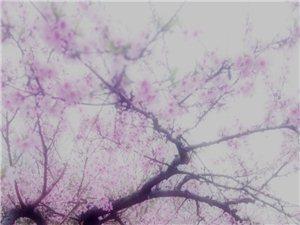 等�e�R得�|�L面,�f紫千�t�是春。