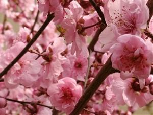 春暖花??开