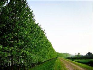 万物生长的季节,因为有事,中途回家一趟,家乡的四月美景依然风光秀丽!