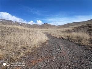 离天最近的地方,草原返青的时候,荒凉里透着隐隐约约的绿气!