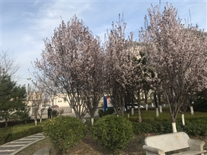 春天的风情园现在是这个样子,你还认识吗?