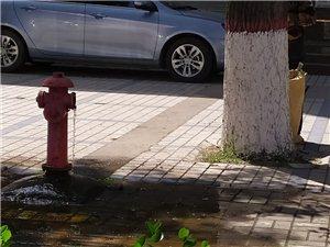 微友爆料:文化路与广安路交叉口北50米路西,有一个消防栓长流水,这水流速度每天几百吨的水被白白浪费掉