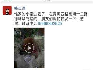 捡到一只小泰迪,在黄河四路渤海十二路德坤华府捡的,朋友们帮忙转发一下!感谢!联系电话15966392
