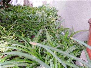 便宜处理土肥养的花