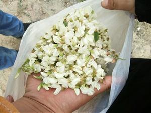 4月份,这么嫩的花,可千万别放过!