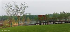 建设中的红玺台公园,51可以如期开放!