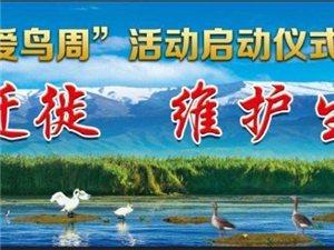 嘉峪关市第四届爱鸟周活动启动仪启动在即