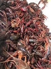 又到了吃龙虾的季节!你会买回家自己做,还是出去吃?