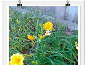 富顺北湖公园,花开锦绣