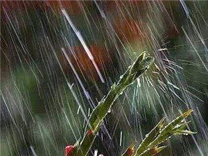 """雨,随风入夜雨,细绵漫悠,靡靡如织,随风入夜。""""三月里的小雨,淅淅沥沥.......淅淅沥沥下"""