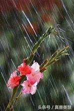 雨,�S�L入夜雨,��d漫悠,靡靡如�,�S�L入夜�!叭�月里的小雨,淅淅�r�r.......淅淅�r�r下