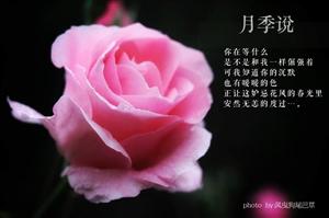 万古秦时月,唐宫一�雍臁S朴仆蓟�里,不怕妒花风。