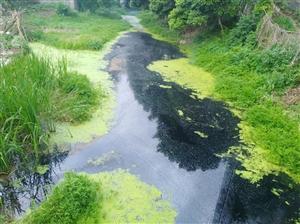 �水河道越治理越臭